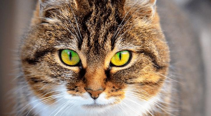 10 maravillosos motivos para tener un gato en casa