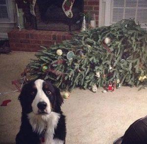 14 Perros Y Gatos Que Destruyeron La Navidad De La Manera Más Tierna