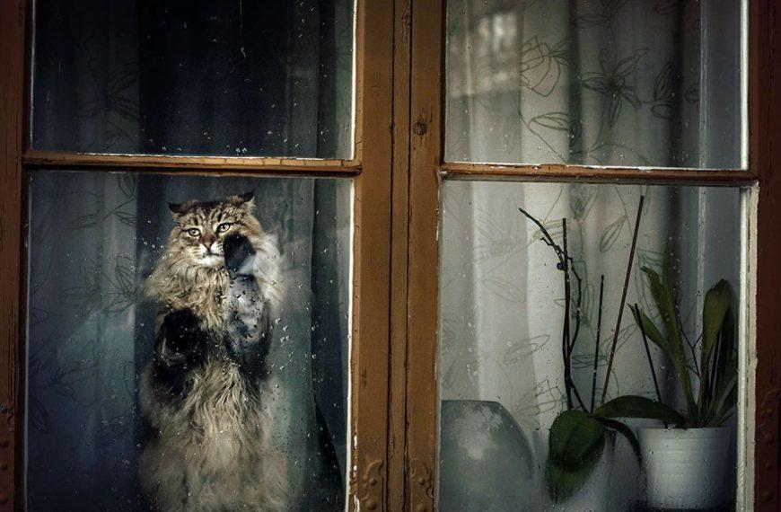 30 Gatos Melancólicos Esperando El Retorno De Sus Amos
