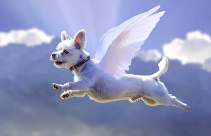 Estos Perros Ciegos Son Verdaderos Ángeles… Gracias A Este Nuevo Invento Adorable
