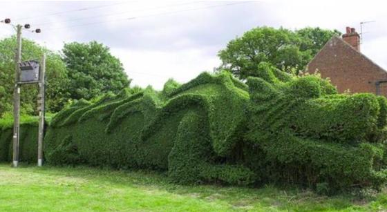 Este Hombre Pasó 13 Años De Su Vida Transformando Esta Cerca De Arbusto En Un Enorme Dragón.