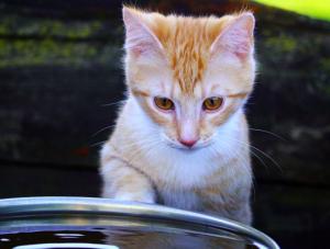 gato en agua
