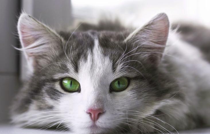gato14