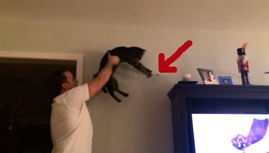 Utiliza a su gato para cazar un bicho