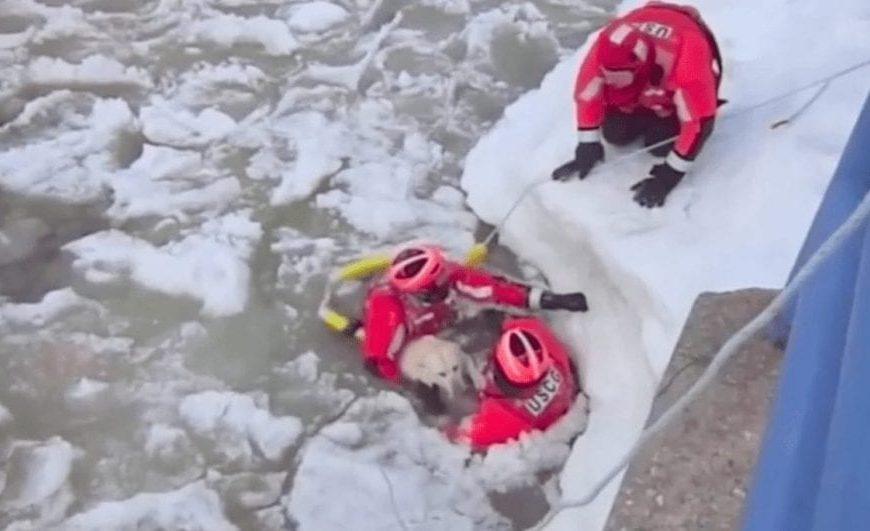 Complicado rescate para salvar a un perro de morir en las aguas heladas