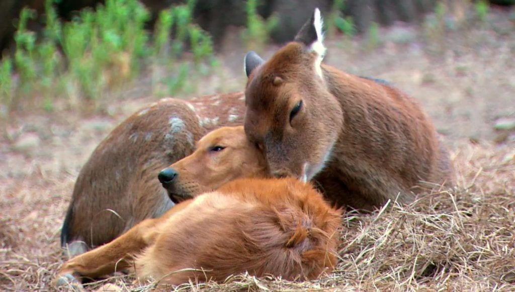 amistad animales
