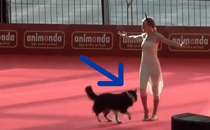 bailarina perro copia 700x434 1