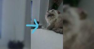 gato malo