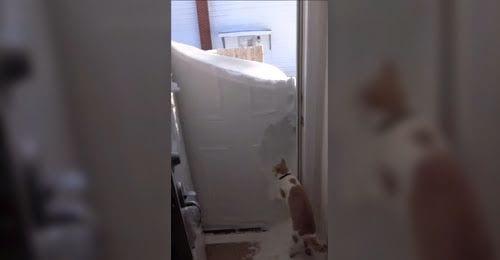 Cuando un gato tiene ganas de salir a pasear, nada se lo impide. Ni siquiera un bloque de nieve en la puerta