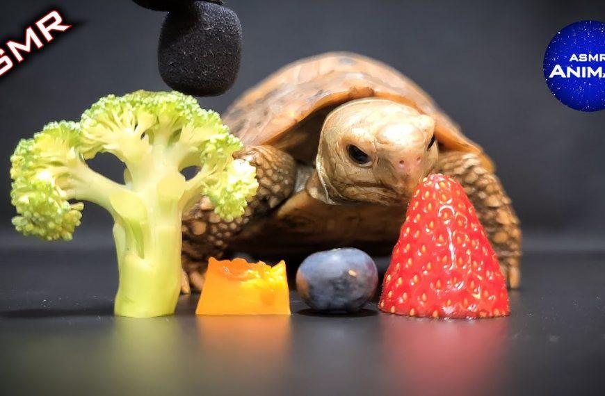 Mira la tortuga ASMR hambrienta que come frutas y verduras